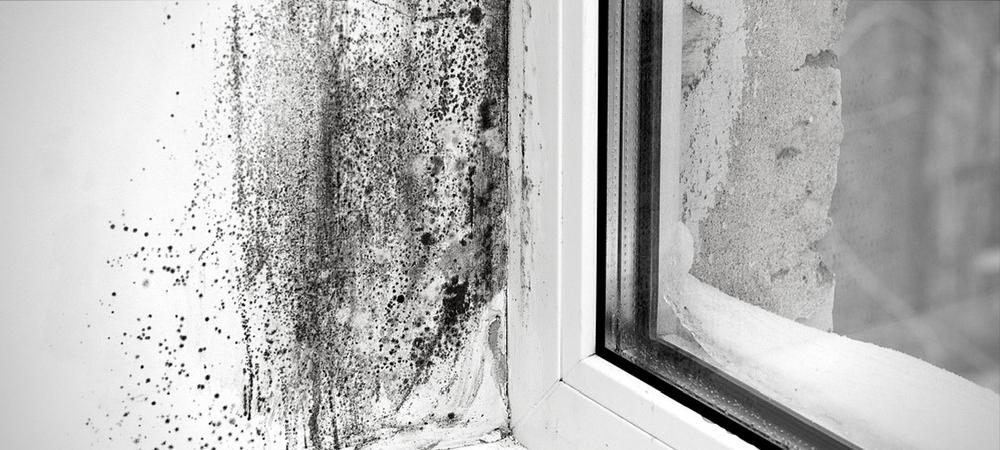 Le muffe sui muri sono tossiche: ecco come prevenirle